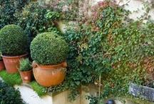 Small gardens / Vertical gardens, courtyard gardens - garden ideas for small spaces.