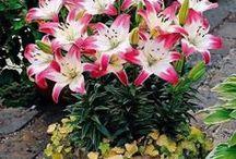 Floral arrangements / Aranjamente florale