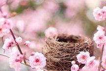 nidi e mangiatoie per uccelli
