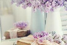 Цветы/Flowers 2