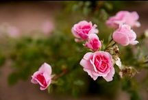 Stop and Smell the Roses / Ideas for stress-free gardening that is seasonal, engages all of your senses, and allows you to appreciate the miracle of life, right from your own porch swing!