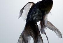 Fish <3