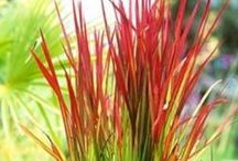 Ornamental Grasses / Grasses create sound and motion in the garden.  Leave them standing for Winter interest. Visit us at www.bordines.com