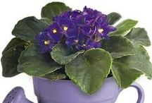 Indoor Flowering Plants / Bring some color indoors with these beautiful indoor flowering plants! Visit us at www.bordines.com