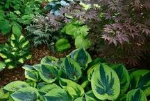 Shade Gardens / These lovely plants brighten any shady area. Visit us at www.bordines.com