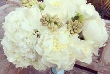 Peonies / Large magnificent flowers to enjoy in your garden or cut to bring in! Visit us at www.bordines.com