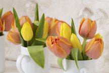 Tulips / I love Tulip!