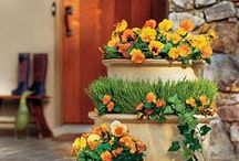 Landscaping & Curb Appeal
