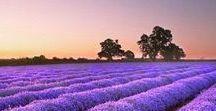 I Love Fashion Purple ❉ / I Love Fashion & I Love Purple ❉