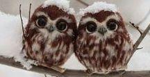 I Love Owl / I Love Owl ♥