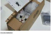 Bhitov - Humor - Cats / Kitties! =^_^=