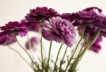 Les Fleurs Toujours