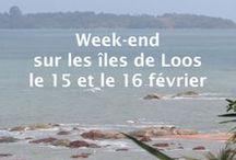 Du Djembé à la danse sur les iles de Loos, 15 et 16 février 2014 / Nous vous invitons à découvrir ensemble la Guinée des danseurs, des rythmes et des paradis méconnus.Venez apprendre en vous dépaysant et vivre des moments inoubliables au son des djembés et dans la douceur de vivre africaine.
