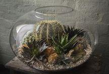 Cactus, terrarios y otras, / by Mercedes