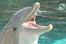Dauphins, tortues, baleines, orques, raies, phoques ... / by Mary Kay