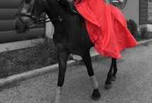 Gray horse and stunning red dress!!! / Gray horse