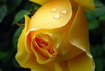 Amazing Yellow Happiness
