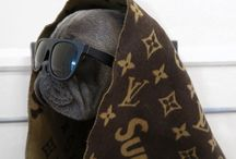 SoulPup Style: Fun Gear for People & Pets  / Soulpup favorites: Super stylish beds, bowls, collars, toys and treats for discriminating pets...and the people who love them.