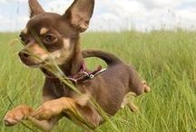 SoulPup: Why We Love Pets / Photos that capture dogs celebrating their inner puppy.