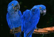 Blue dreams / Alles was blau ist