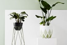 Planter / Plants