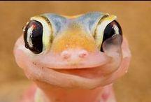 .:SoKawaii!! - ReptileStyle:.