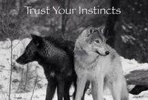.:SoKawaii!! - Fox 'n' Wolf:.