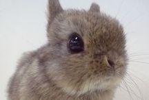 .:SoKawaii!! - Bunny Business:.