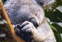 .:SoKawaii!! - Bear Necessities:. / Pandabears or teddybears or koalabears....Share the bear(love).