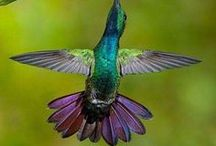 I Can Fly! / Well, if I was grown.... and had real wings!