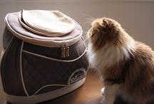 daisuki carrybag in cat キャリーバッグに入った猫