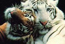 Gli animali non tradiscono mai