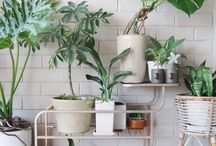 home | greenery + blooms / a home isn't a home until there is plants in it