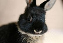 animals | lapin / all about rabits