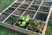 Square Foot Gardening / The best and easiest way to grow more food in less space
