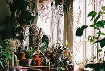 Grow Grow Grow / tree & leaf / by Sarah Clarkson