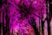 Flower & Landscape