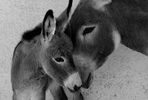 really cute animalss