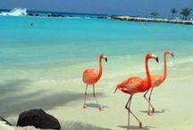 abc- islands (Aruba, Bonaire and Curacao)