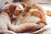 animals | felidae / all things feline
