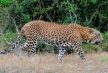 Wildlife Trails Blog