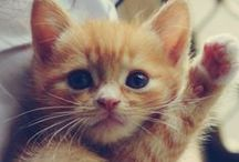 CATS - and other cute animals / There are more cats than anything else, but I'm trying to add some variety.  I find all baby animals adorable.
