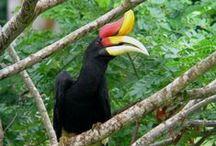Borneo Tours and Safaris