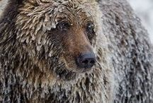 National Geographic BEST WILDLIFE pictures ever? / Here are our personal favourite wildlife photos from the iconic National Geographic magazine. Do you agree with our choices?