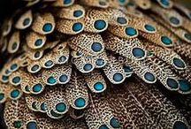 Peacock / Fantastic colors!