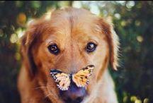 BLOG DOG'S AFFAIRE / En el blog de Dog's Affaire podrás encontrar todo tipo de noticias de actualidad, tendecias, y artículos sobre salud para tu mascota.