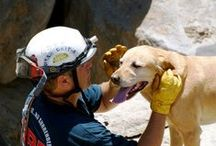 Best Dog Rescues! / ALL rescues are the best rescues. Help a little buddy out today.