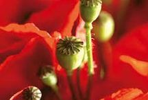 poppy and wildmeadows / color inspiration for my couture dresses with upcycling elements