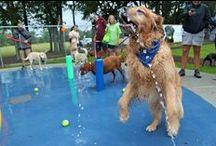 Dog Parks / Dog parks pictures