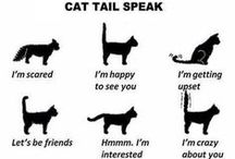 Cat  Info / Info about cats for cat owners and lovers.